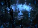 Notum Forest